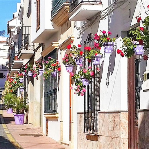 Street flowers in the Sierra de las Nieves